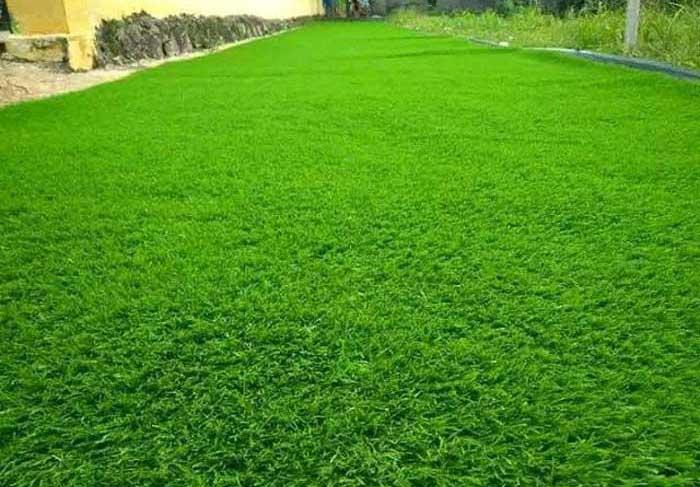 Taman-rumput-sintetis